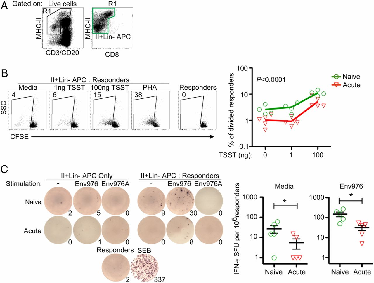 Macrophages And Myeloid Dendritic Cells Lose T Cellstimulating