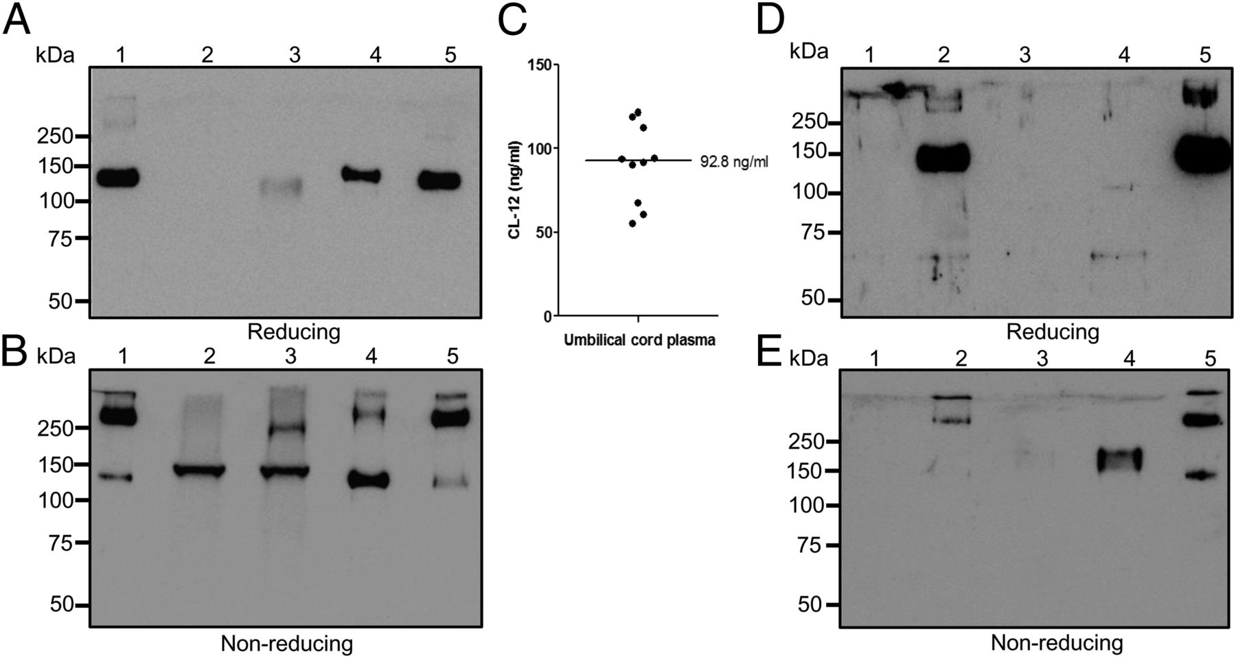 Soluble Collectin-12 (CL-12) Is a Pattern Recognition