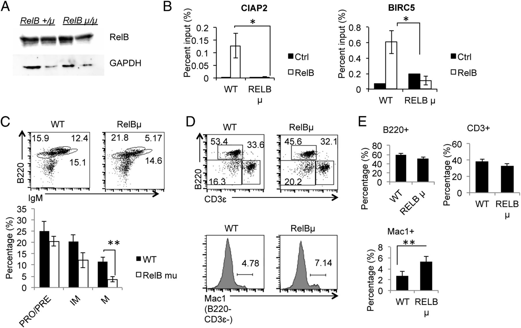 Deleted In Breast Cancer 1 Suppresses B Cell Activation Through Relb Led Bargraph Driver Circuit Diagram Tradeoficcom Download Figure