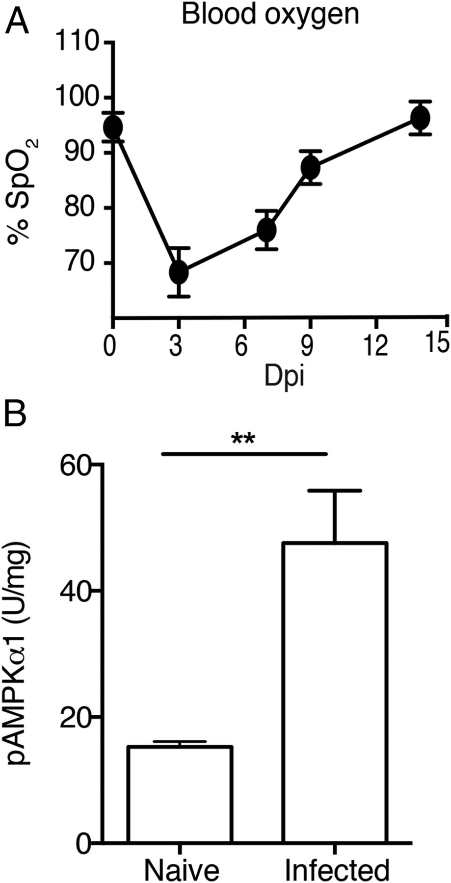 Myeloid-Restricted AMPKα1 Promotes Host Immunity and