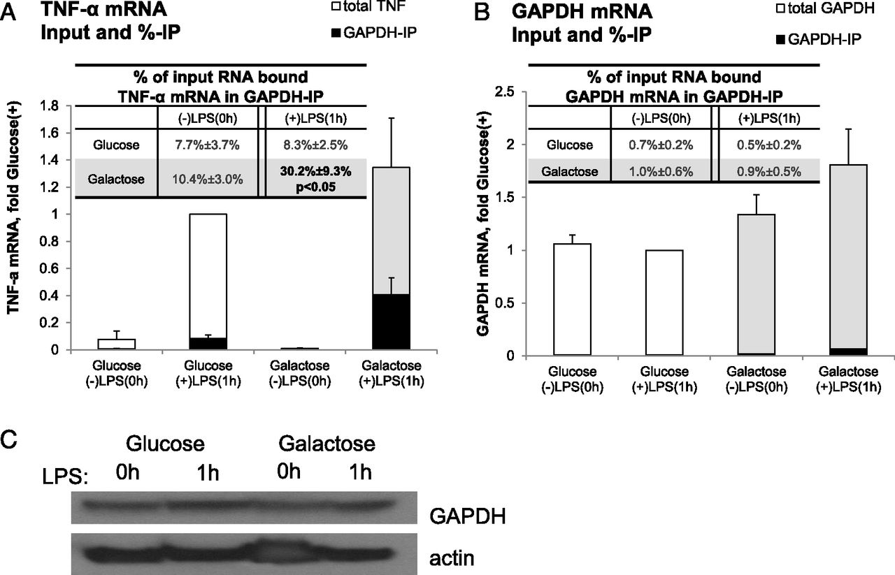 GAPDH Binding to TNF-α mRNA Contributes to