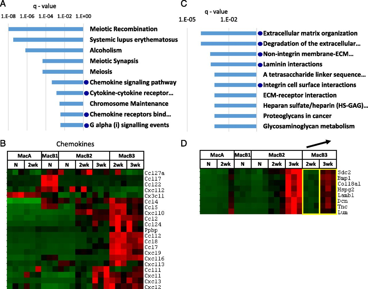 Expression Profiling Of Macrophages Reveals Multiple