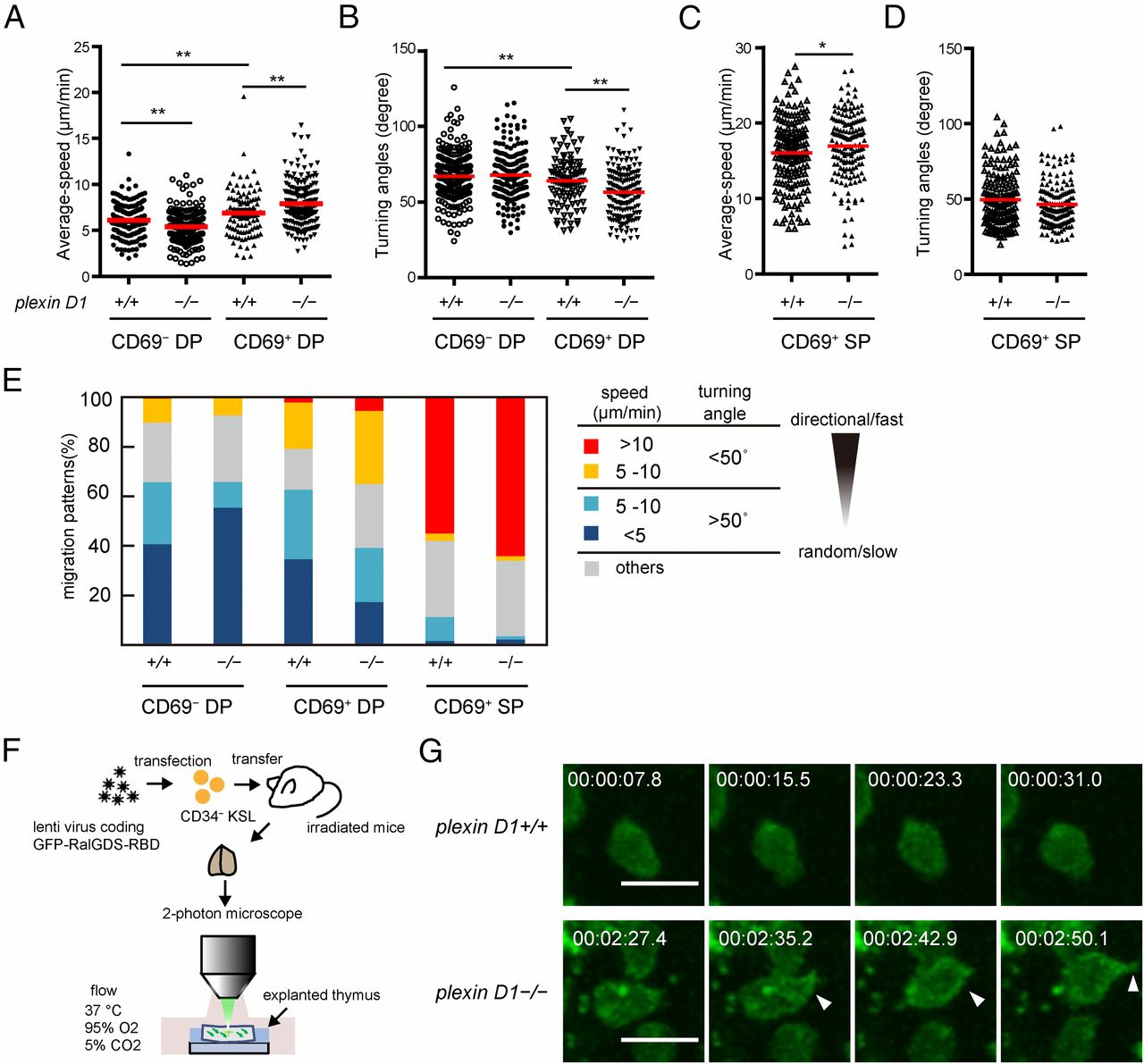 Sema3e/Plexin D1 Modulates Immunological Synapse and