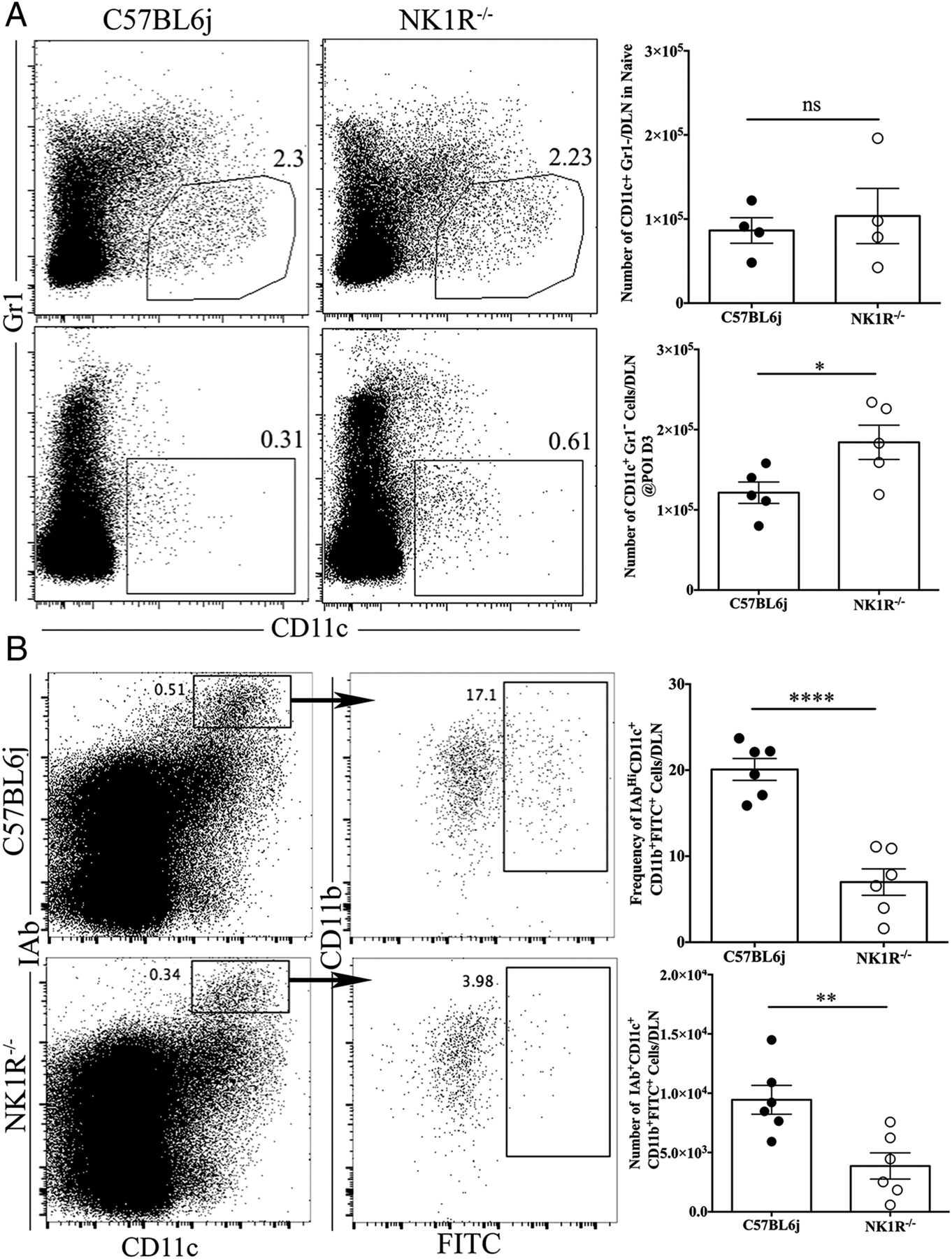 Loss of Neurokinin-1 Receptor Alters Ocular Surface