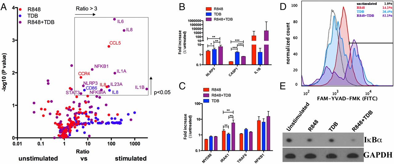 Newborn Immune Activation May Have Long >> Age Specific Adjuvant Synergy Dual Tlr7 8 And Mincle Activation Of