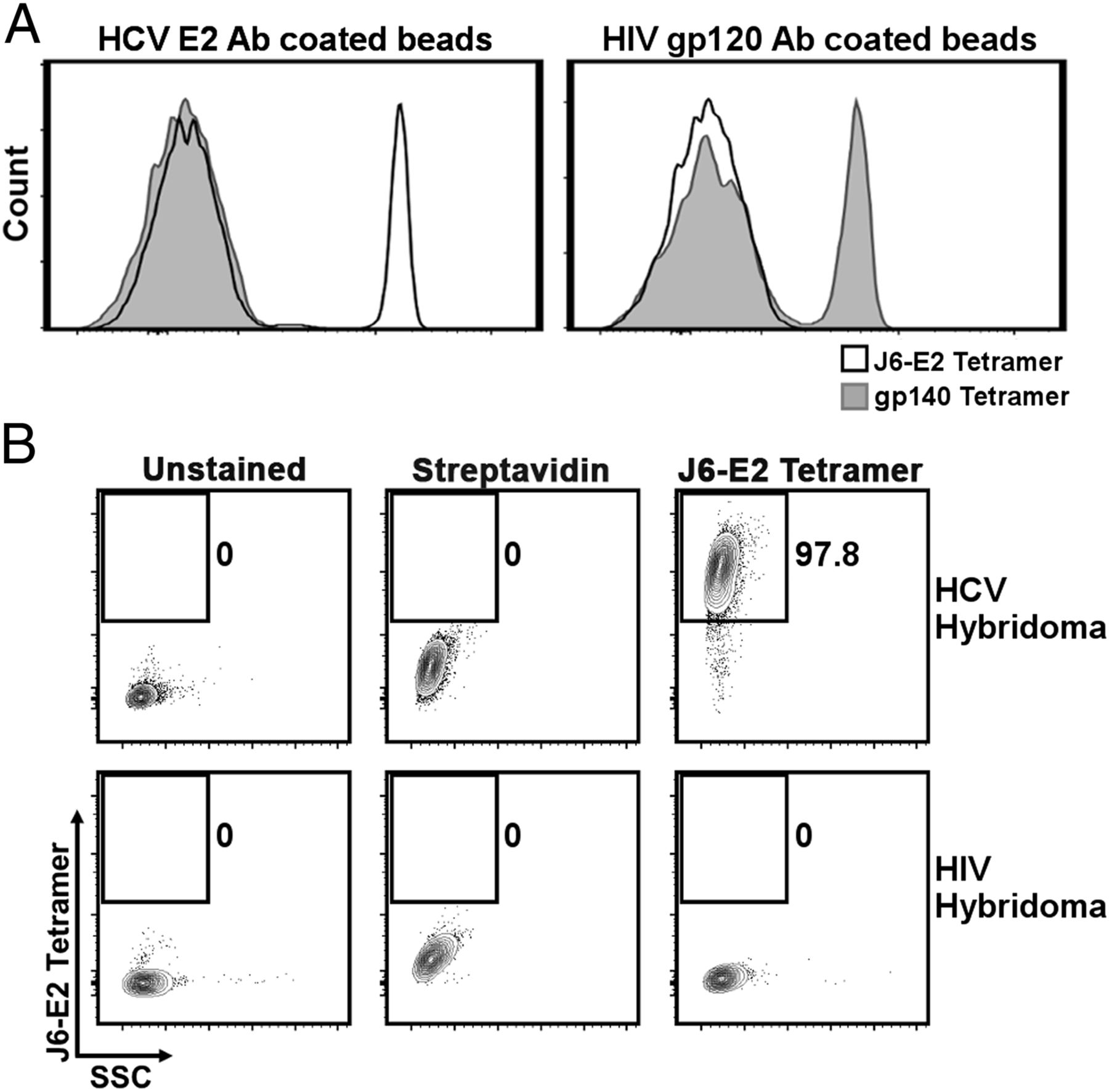 Novel E2 Glycoprotein Tetramer Detects Hepatitis C Virus–Specific