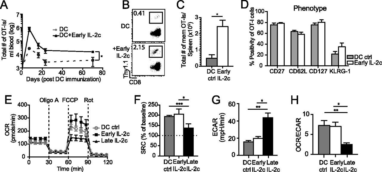Manipulating Memory Cd8 T Cell Numbers By Timed Enhancement Of Il 2