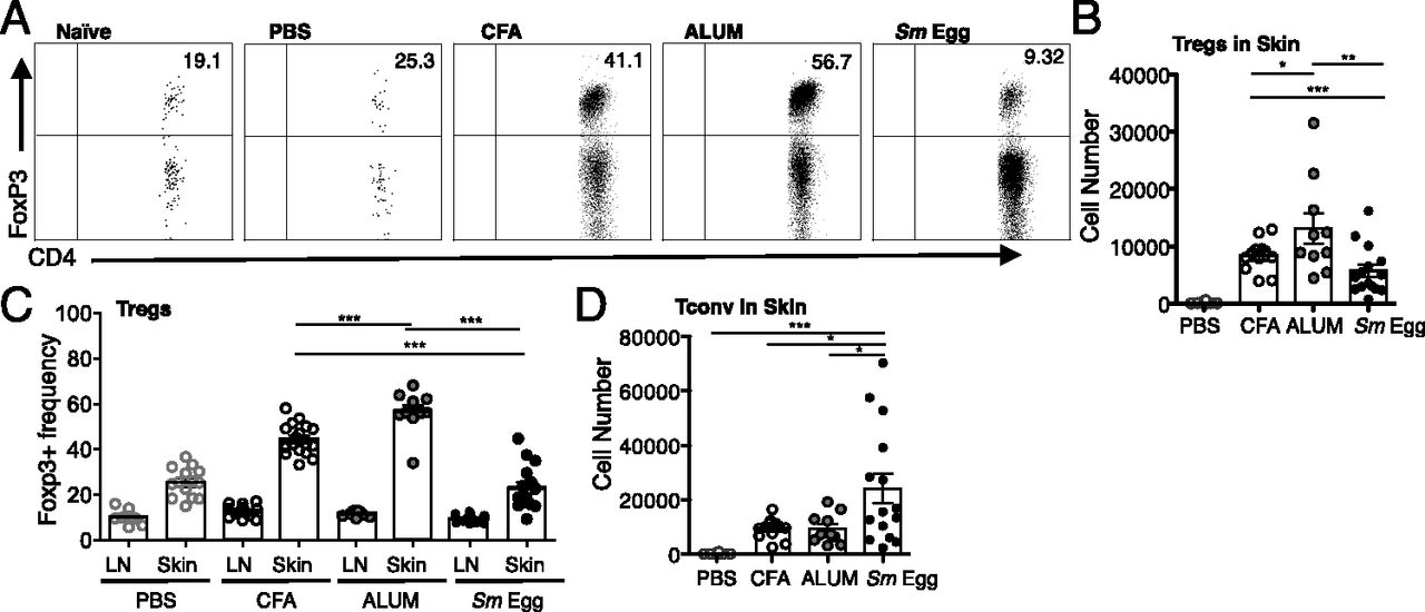 Regulatory T Cell Numbers in Inflamed Skin Are Controlled by