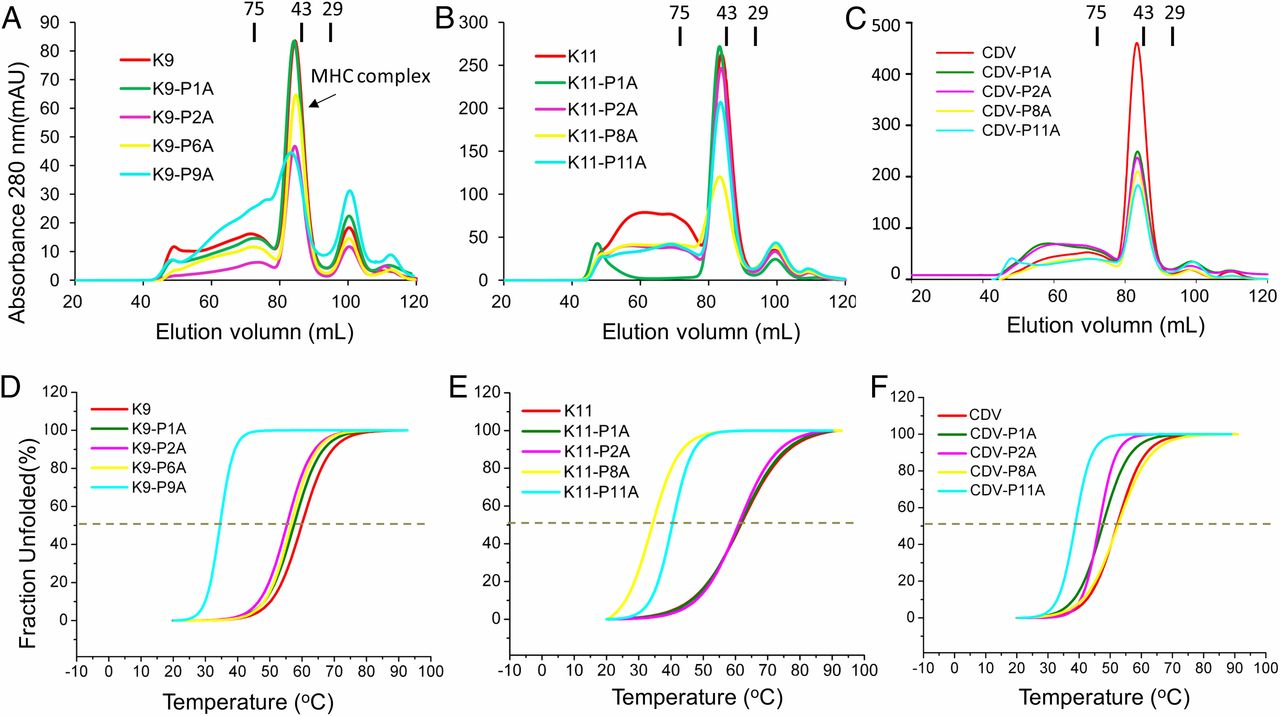 Diversified Anchoring Features the Peptide Presentation of DLA-88