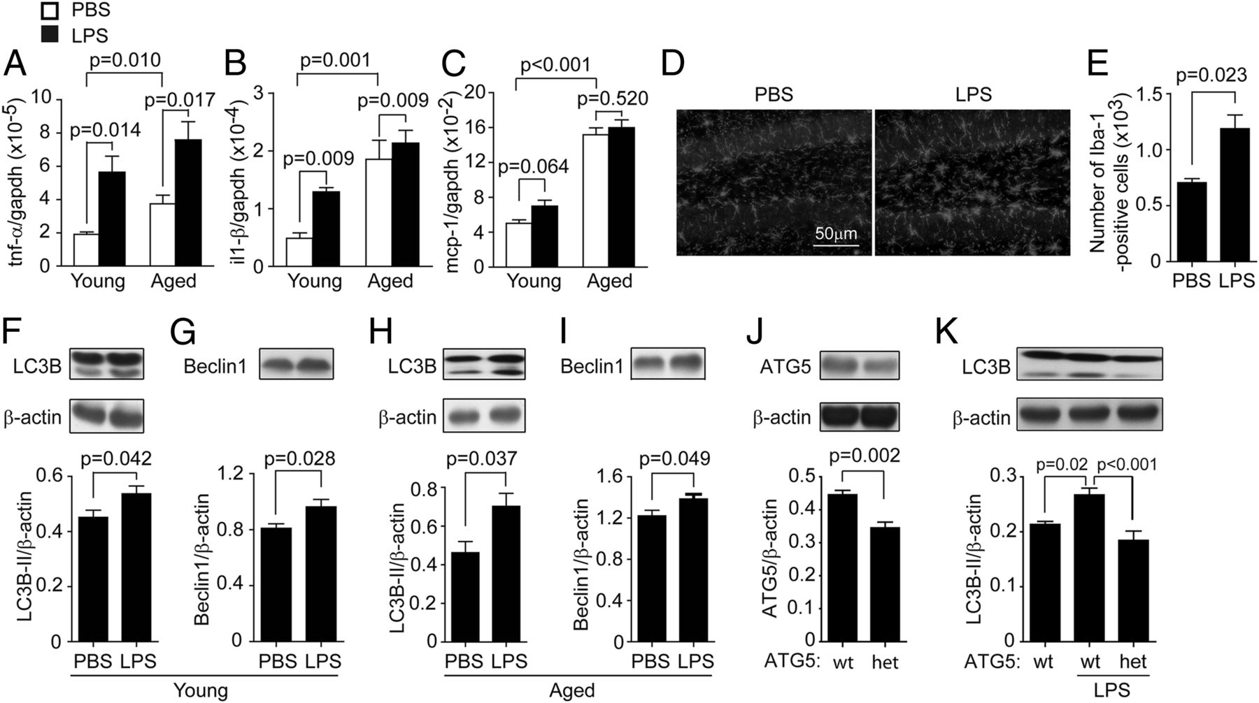 Stimulation of TLR4 Attenuates Alzheimer's Disease–Related
