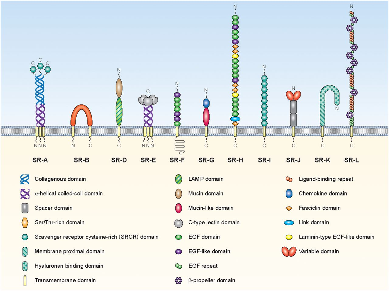 A Consensus Definitive Classification Of Scavenger Receptors And Pc Schematic Automation Screenshot 6 Download Figure