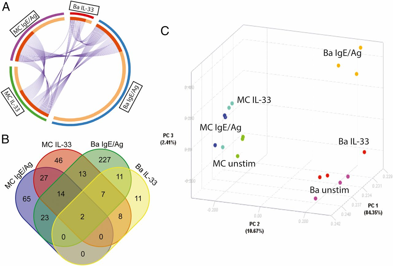 Transcriptional heterogeneity of mast cells and basophils upon download figure ccuart Choice Image