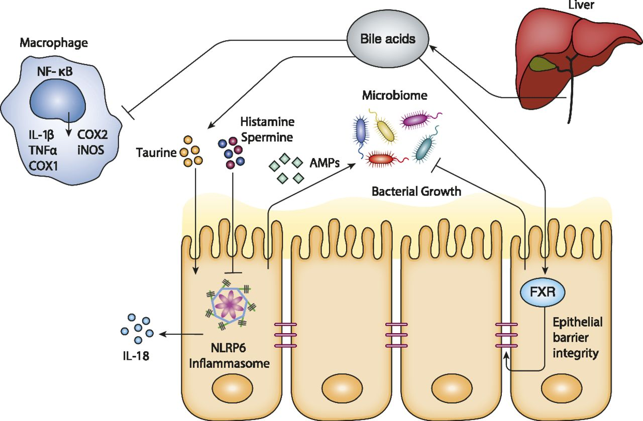Microbiome-Modulated Metabolites at the Interface of Host Immunity ...