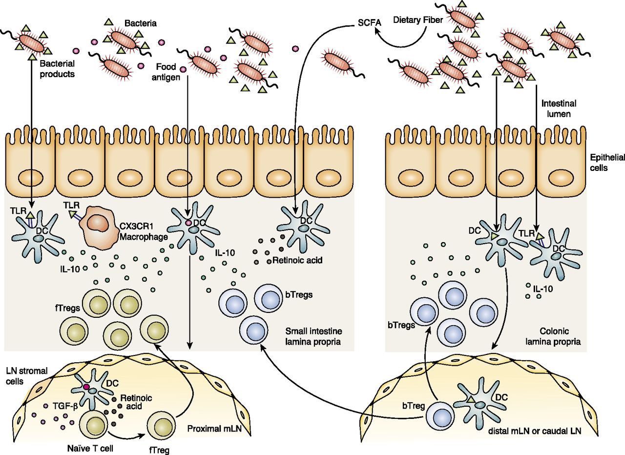 The Influence of the Microbiome on Allergic Sensitization to