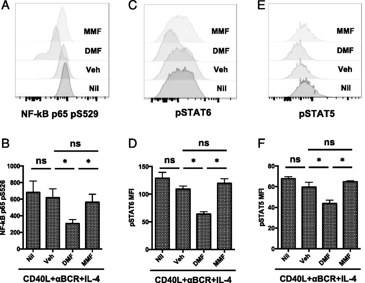 Dimethyl Fumarate Treatment Mediates an Anti-Inflammatory
