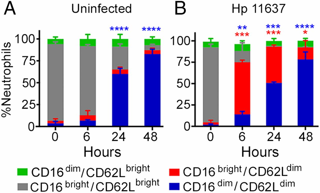 Cutting Edge Helicobacter Pylori Induces Nuclear