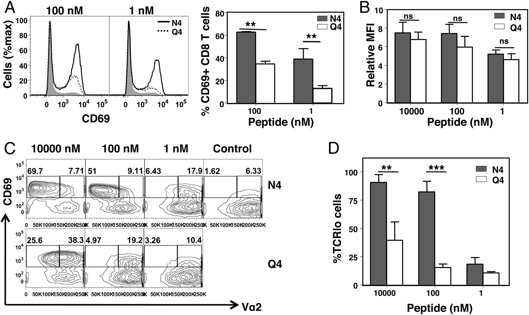 Modulation of Naive CD8 T Cell Response Features by Ligand