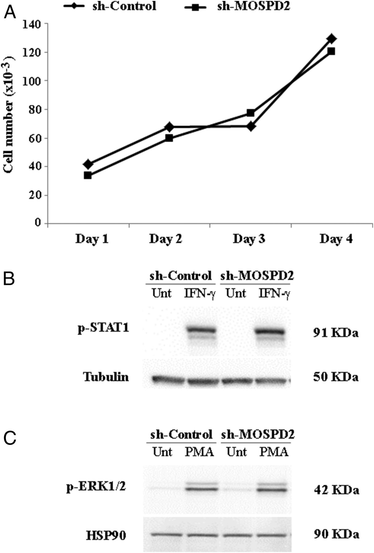 Identification Of Motile Sperm Domaincontaining Protein 2 As Tc 90 Engine Compartment Diagram Download Figure
