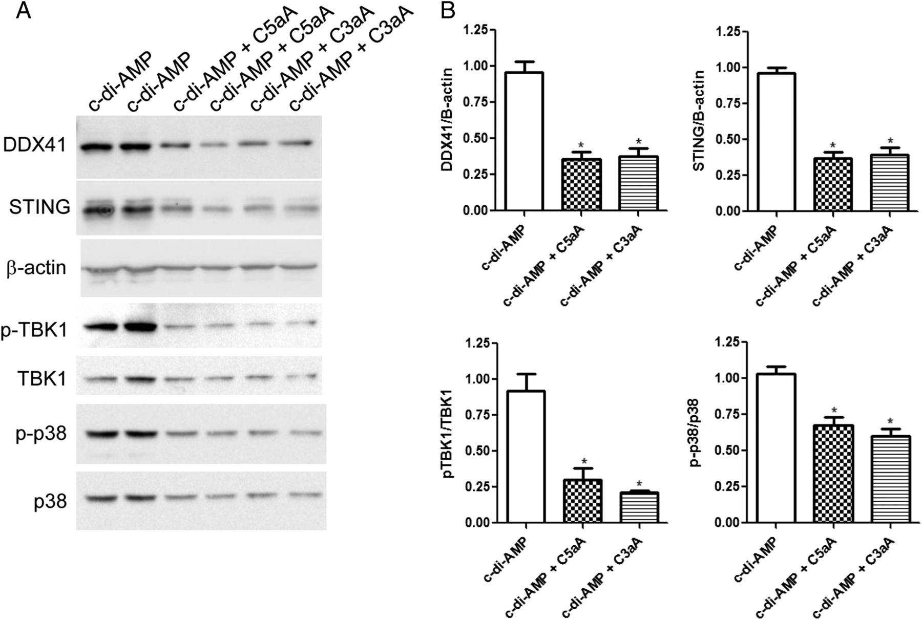 The Complement Anaphylatoxins C5a and C3a Suppress IFN-β