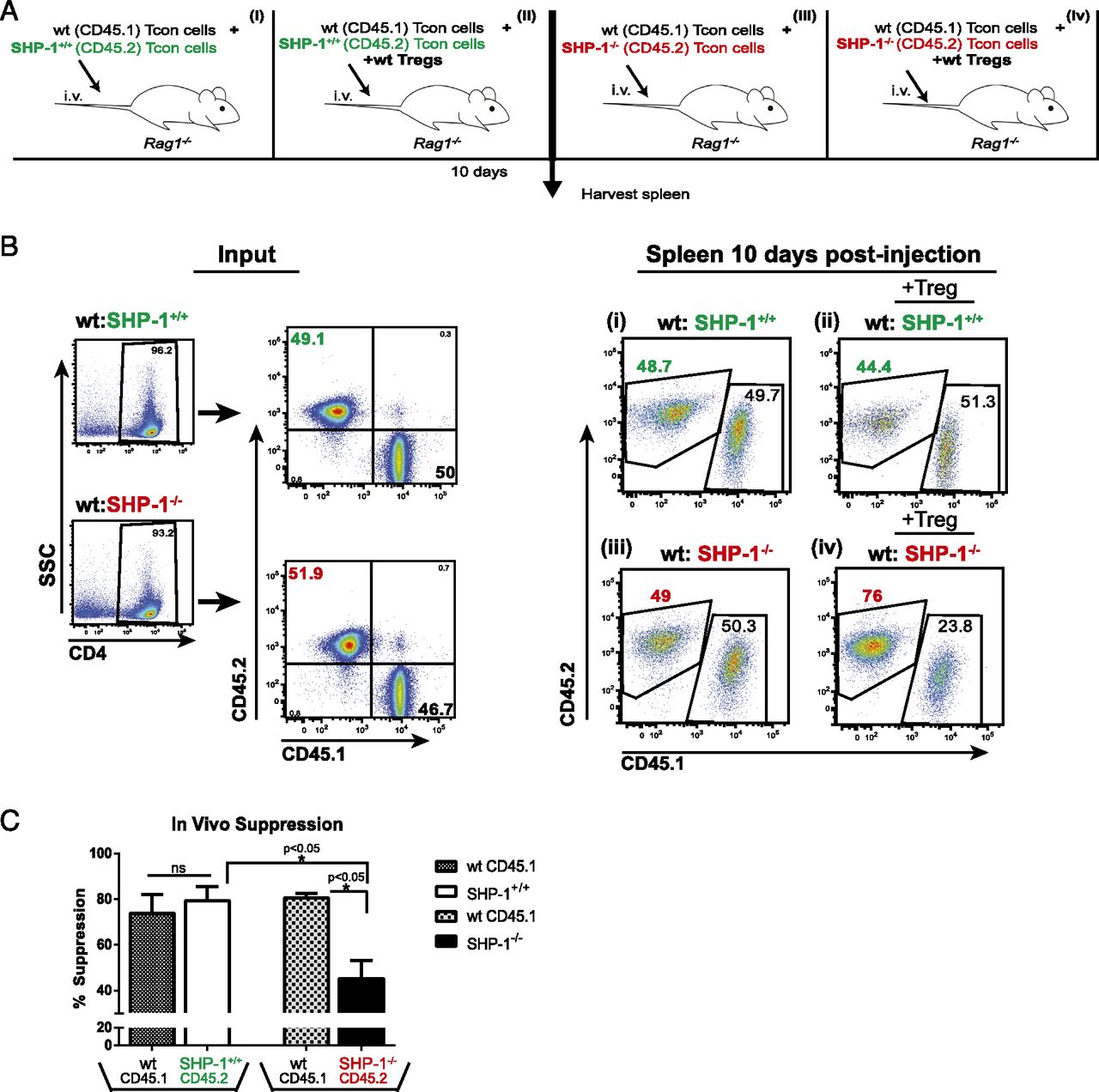T Cells Deficient In The Tyrosine Phosphatase Shp 1 Resist Led Tv Schematic Tcon Board Or Download Figure