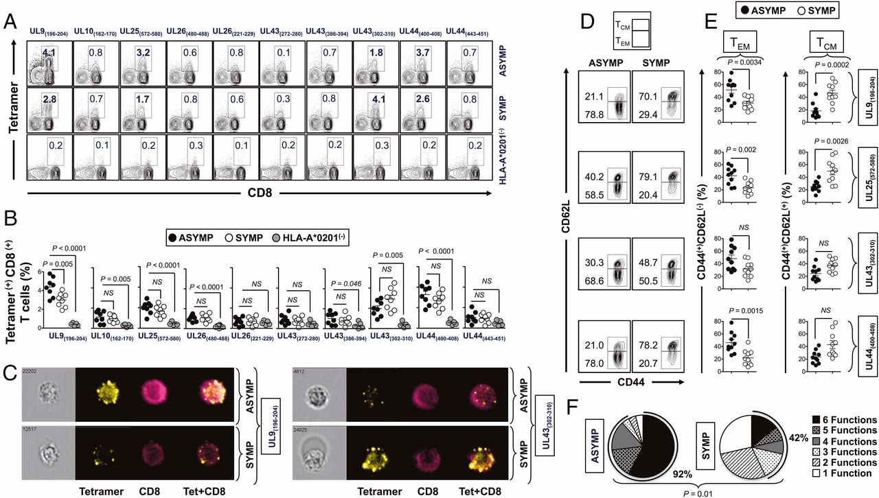 Bolstering the number and function of hsv 1specific cd8 effector download figure fandeluxe Gallery