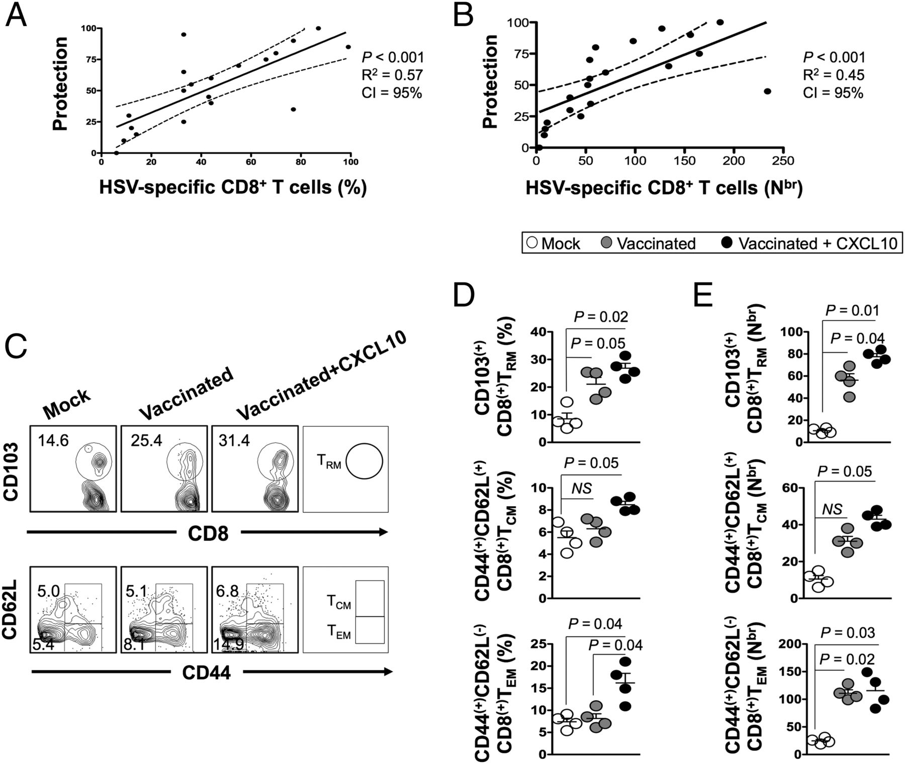 Bolstering the Number and Function of HSV-1–Specific CD8+