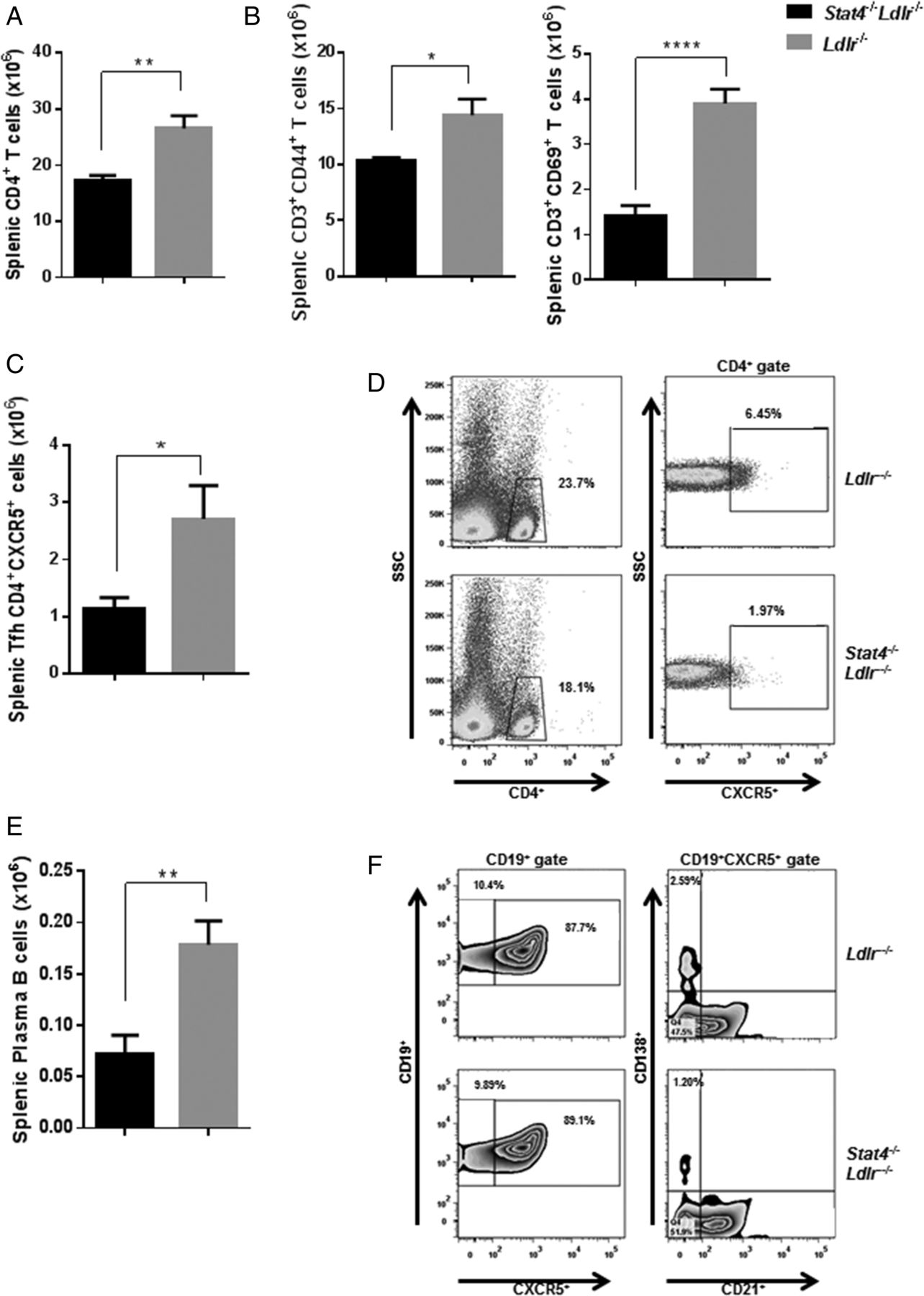 STAT4 Regulates the CD8+ Regulatory T Cell/T Follicular Helper Cell