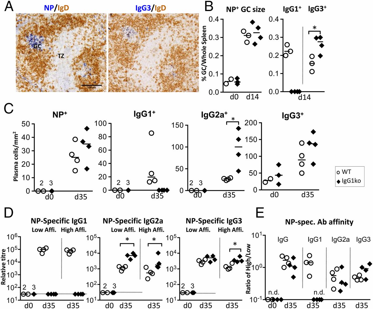 IgG1 Is Required for Optimal Protection after Immunization