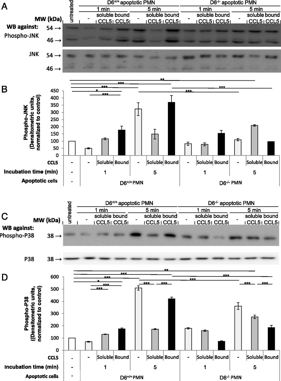 CCL5 Promotes Resolution-Phase Macrophage Reprogramming in Concert ...