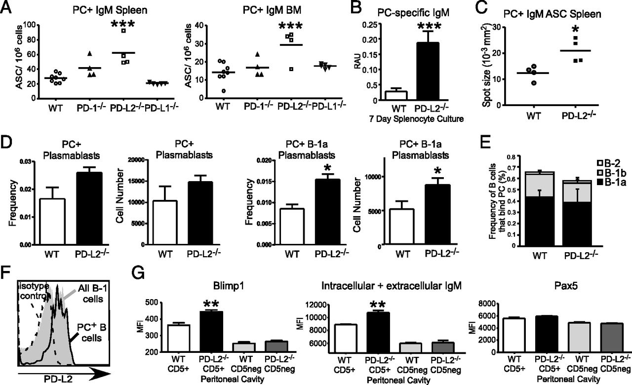 PD-L2 Regulates B-1 Cell Antibody Production against