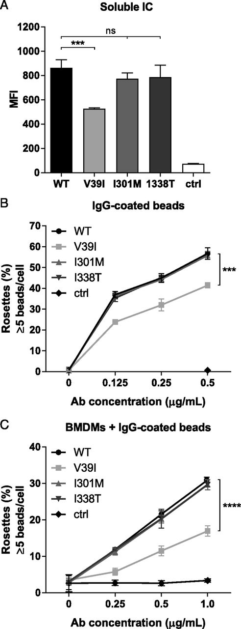 Single Nucleotide Polymorphisms of the High Affinity IgG