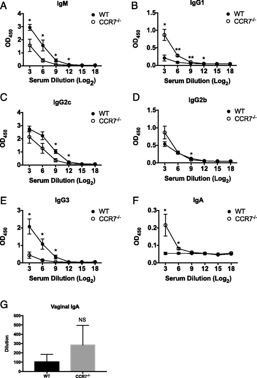 CCR7 Deficiency Allows Accelerated Clearance of Chlamydia