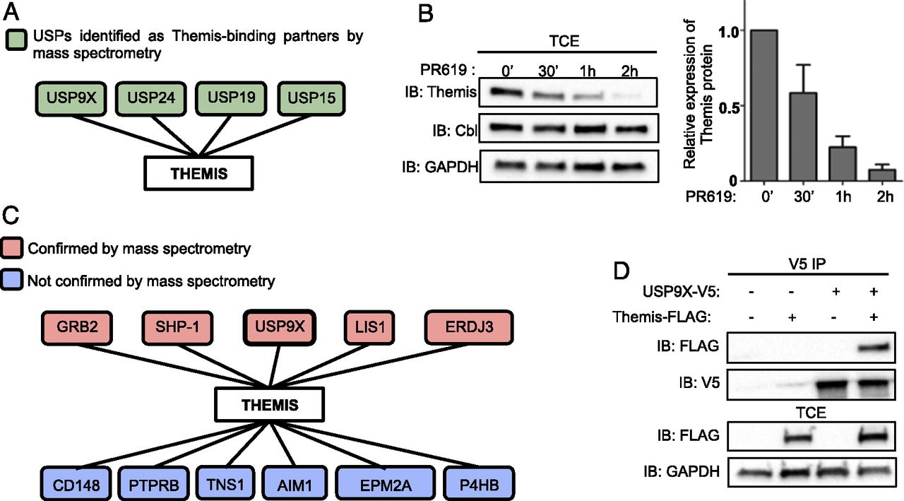 Grb2-Mediated Recruitment of USP9X to LAT Enhances Themis