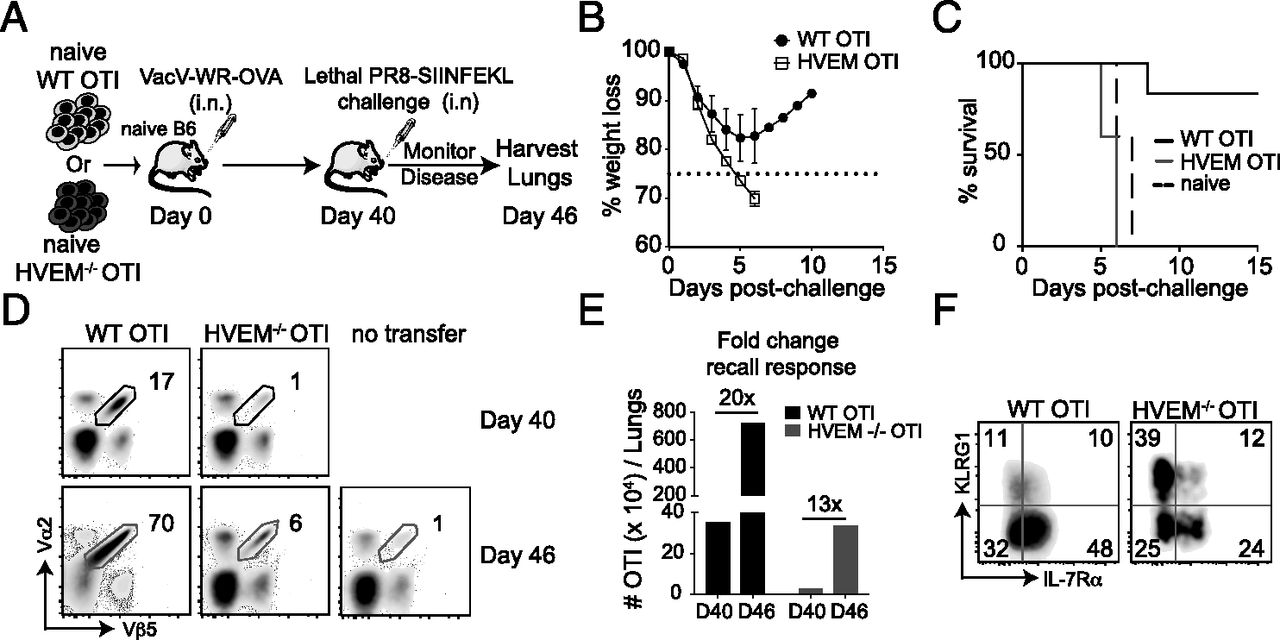 HVEM Imprints Memory Potential on Effector CD8 T Cells Required ...