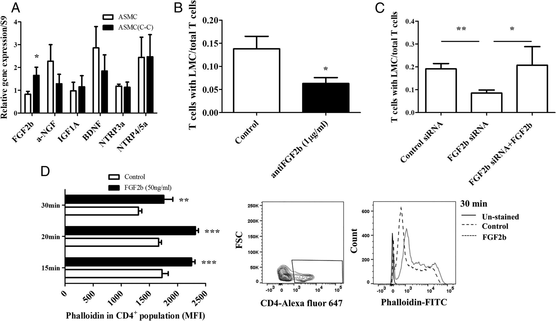 Basic Fibroblast Growth Factor 2 Is a Determinant of CD4 T Cell