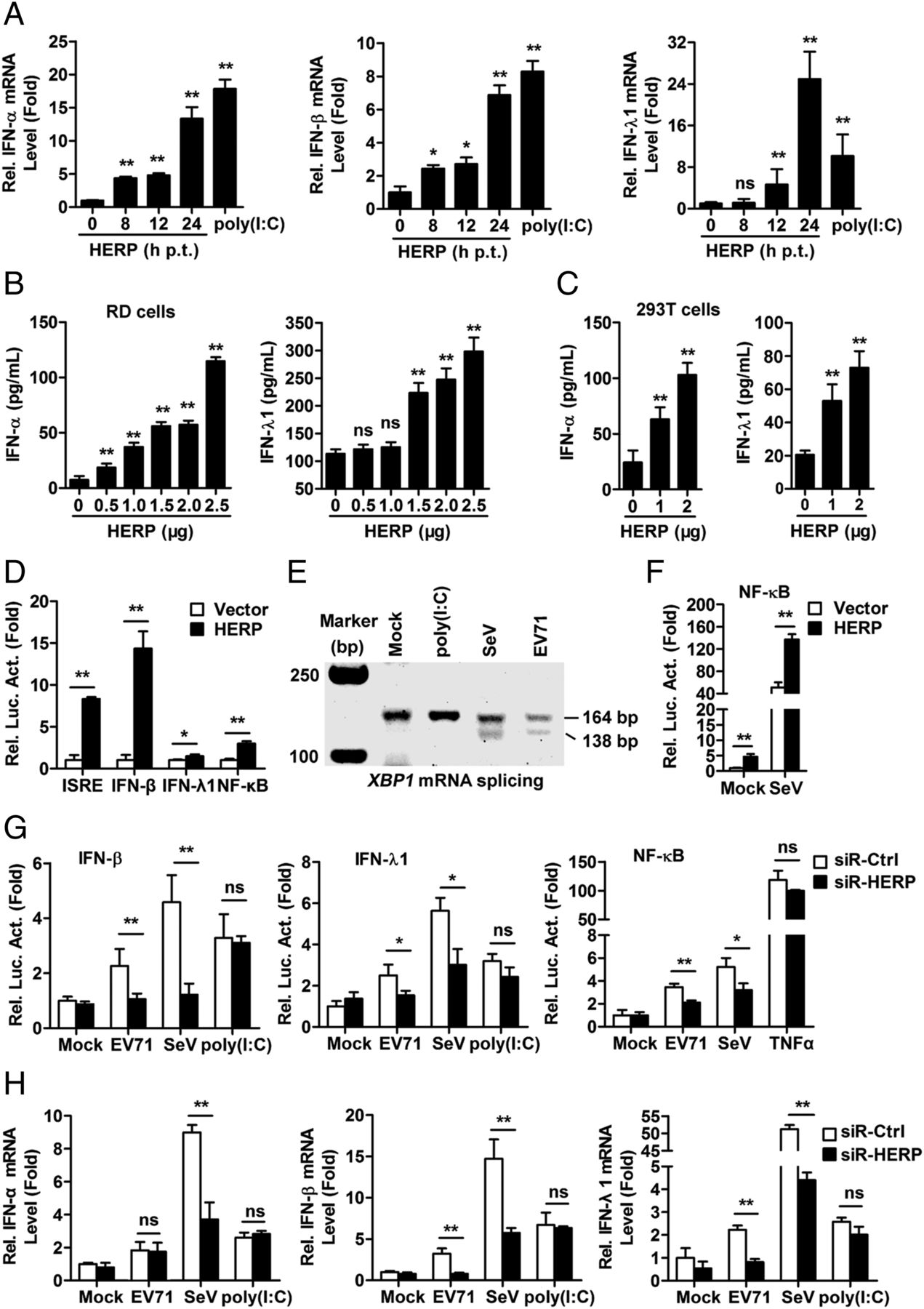 HERP Binds TBK1 To Activate Innate Immunity and Repress