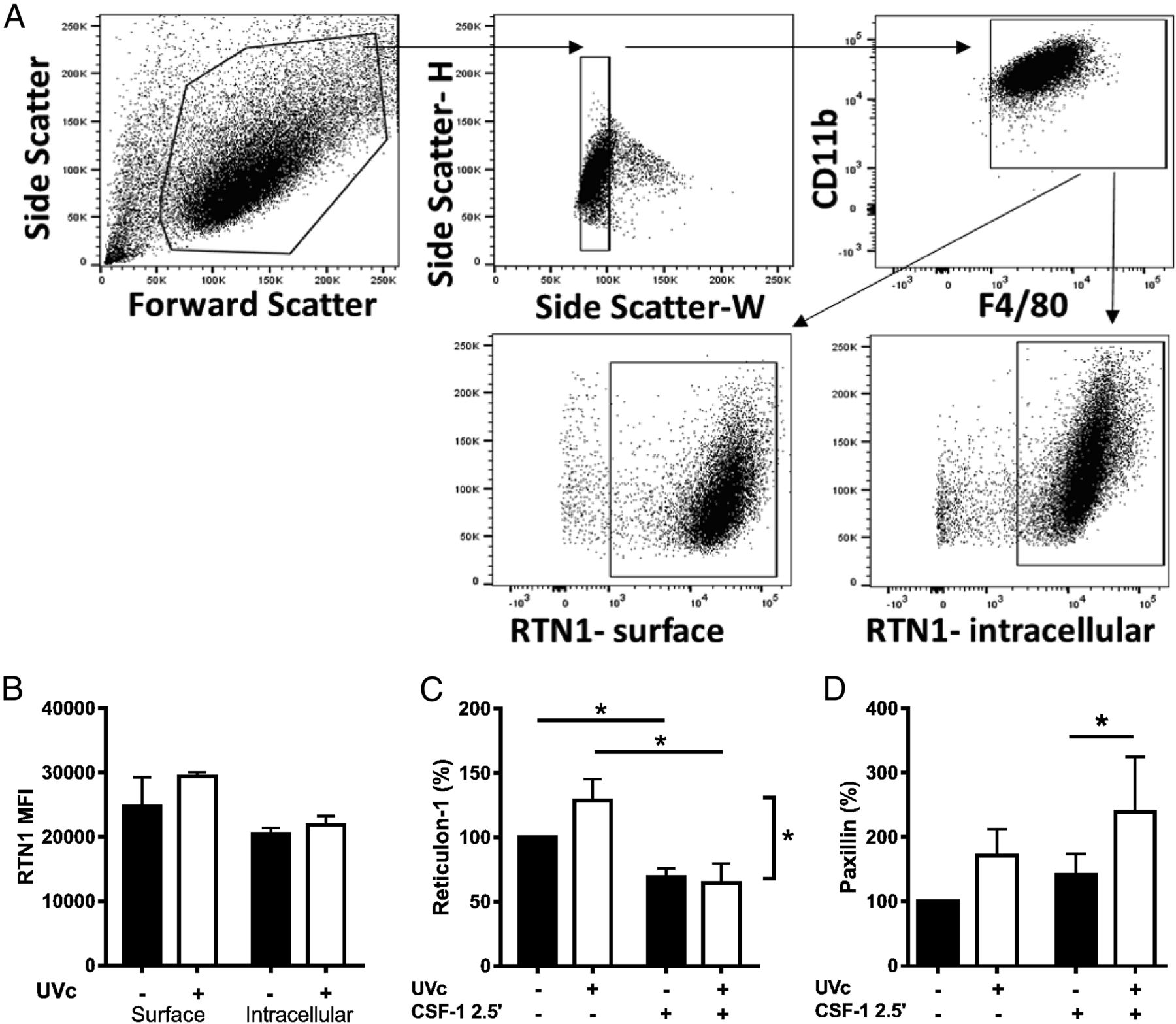 Reticulon-1 and Reduced Migration toward Chemoattractants by
