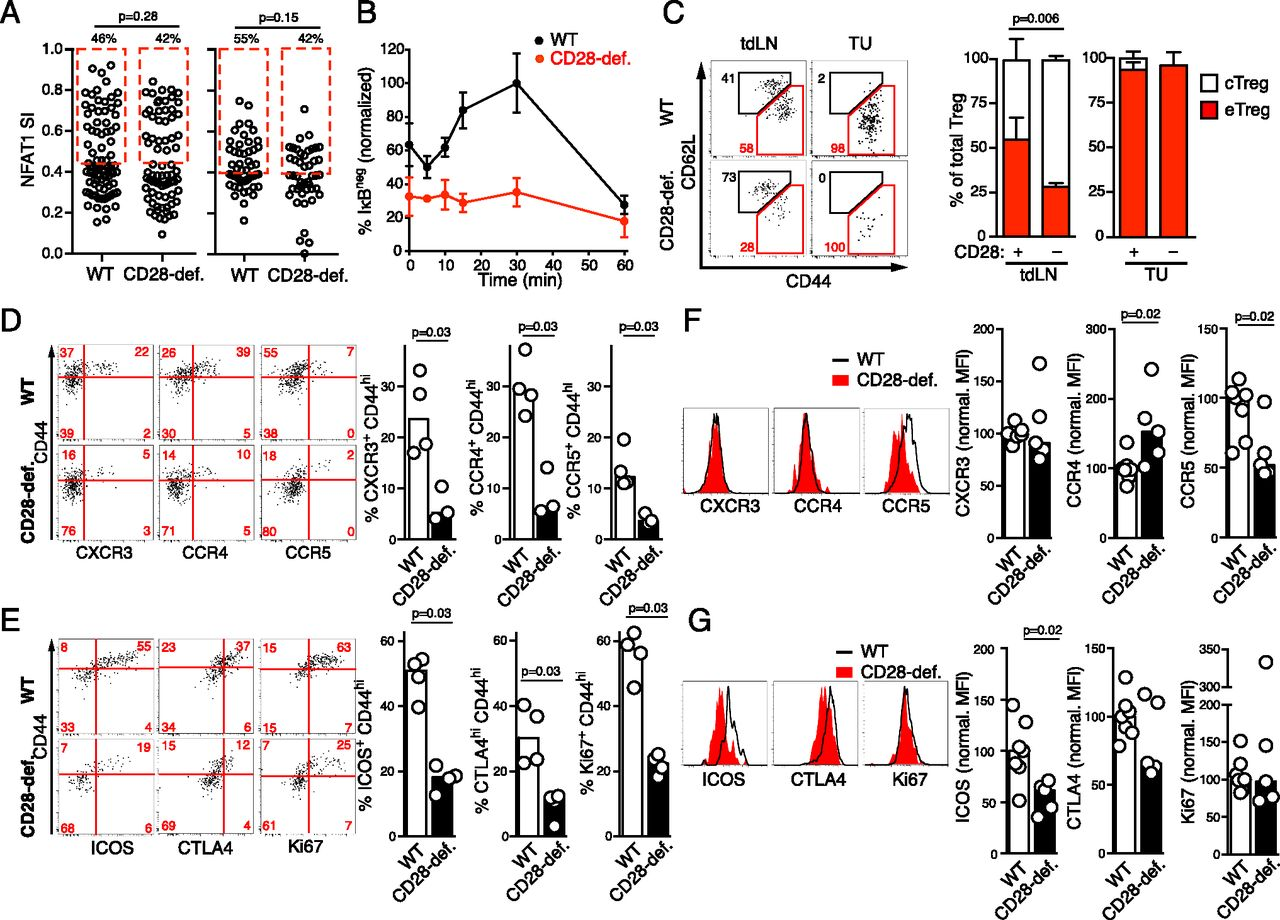Tumor Tolerancepromoting Function Of Regulatory T Cells Is Diagram In Addition Traffic Along With Ex Le Signal Wiring Download Figure