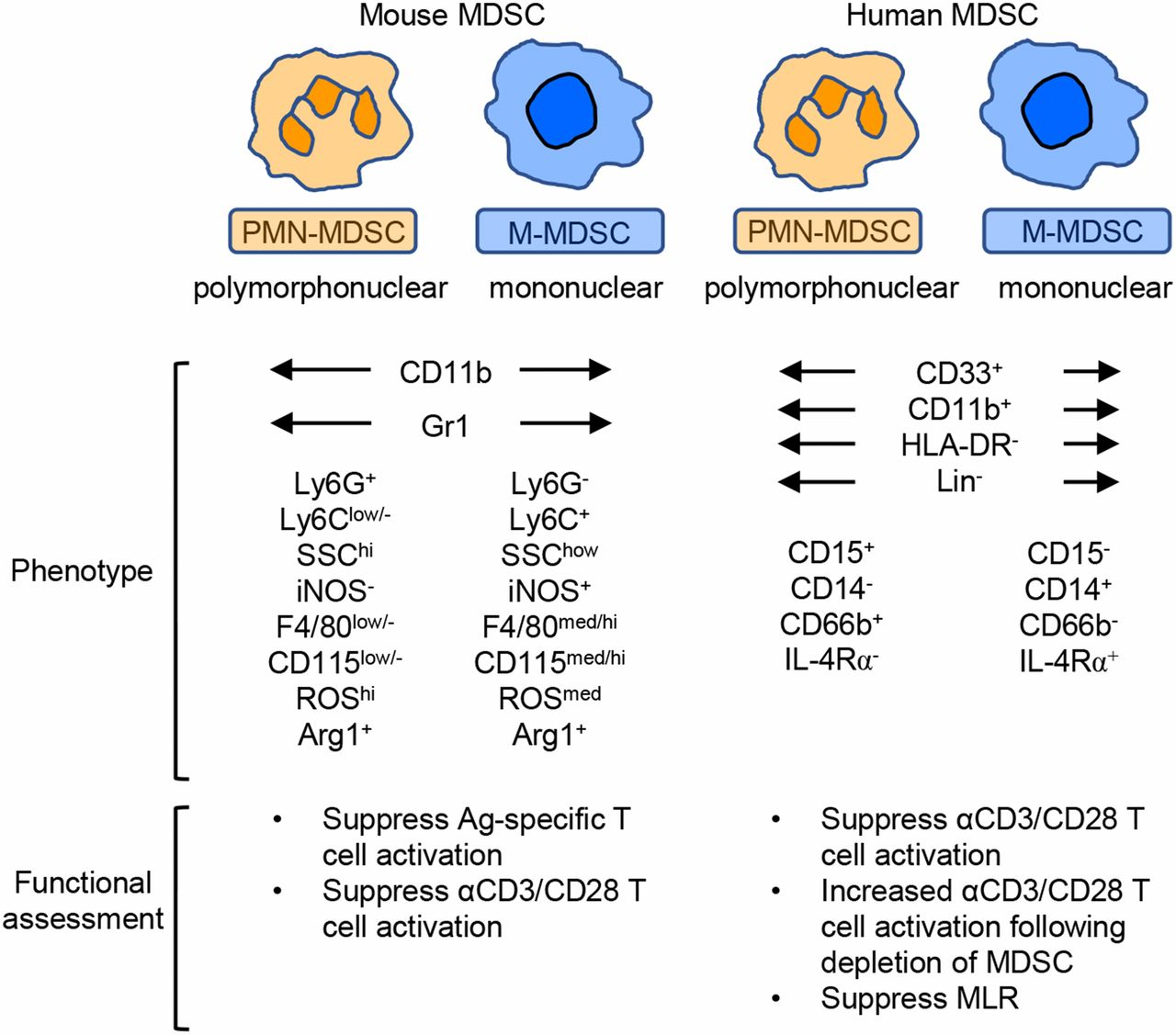 Myeloid-Derived Suppressor Cells: Immune-Suppressive Cells That