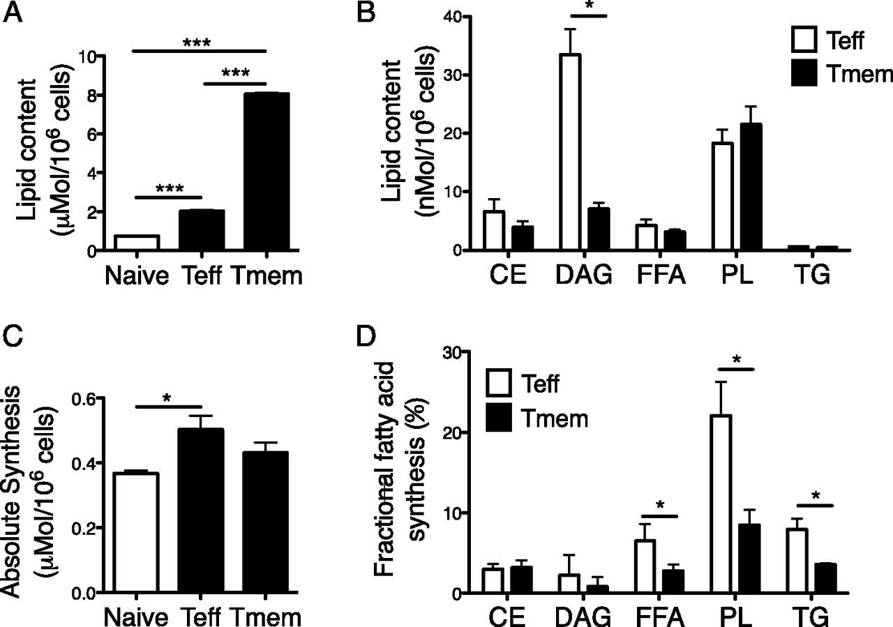 Early Inhibition of Fatty Acid Synthesis Reduces Generation