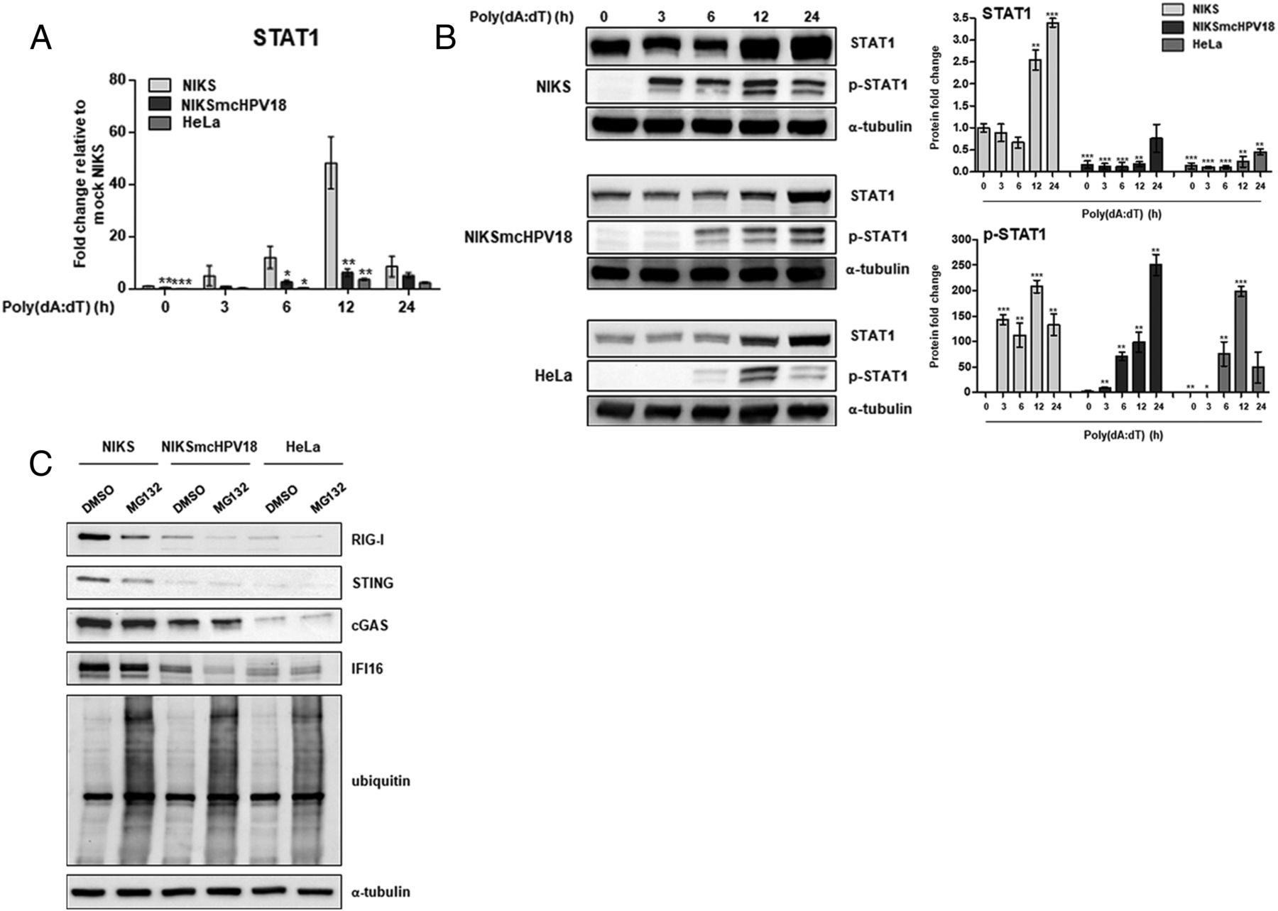 hpv18 persistence impairs basal and dna ligand mediated ifn i and