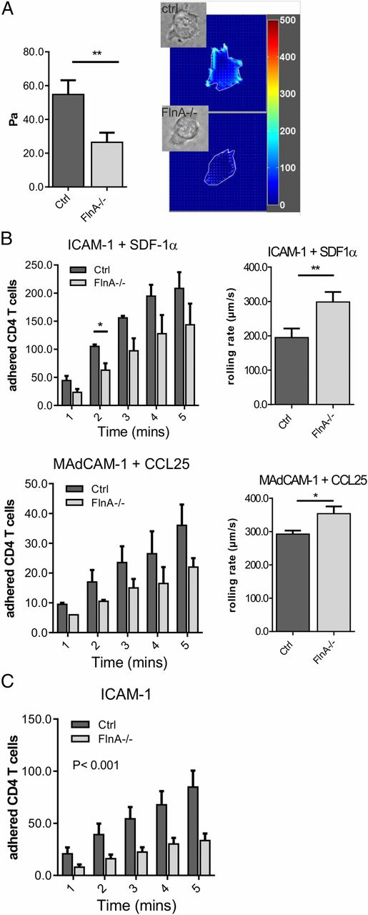 Filamin A Is Required for Optimal T Cell Integrin-Mediated Force