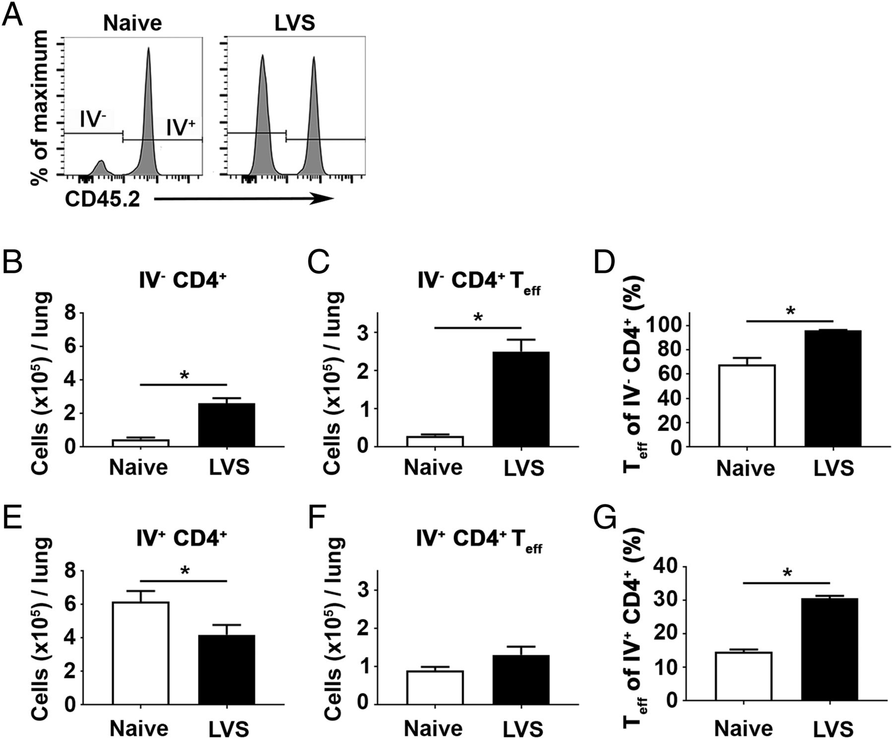 Temporal Requirement for Pulmonary Resident and Circulating T Cells