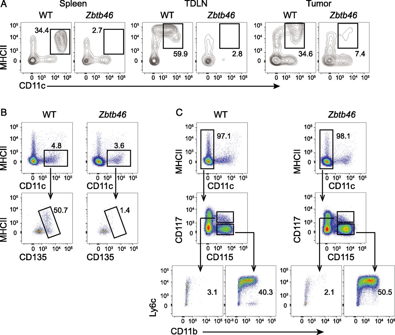 Tumor Dendritic Cells (DCs) Derived from Precursors of