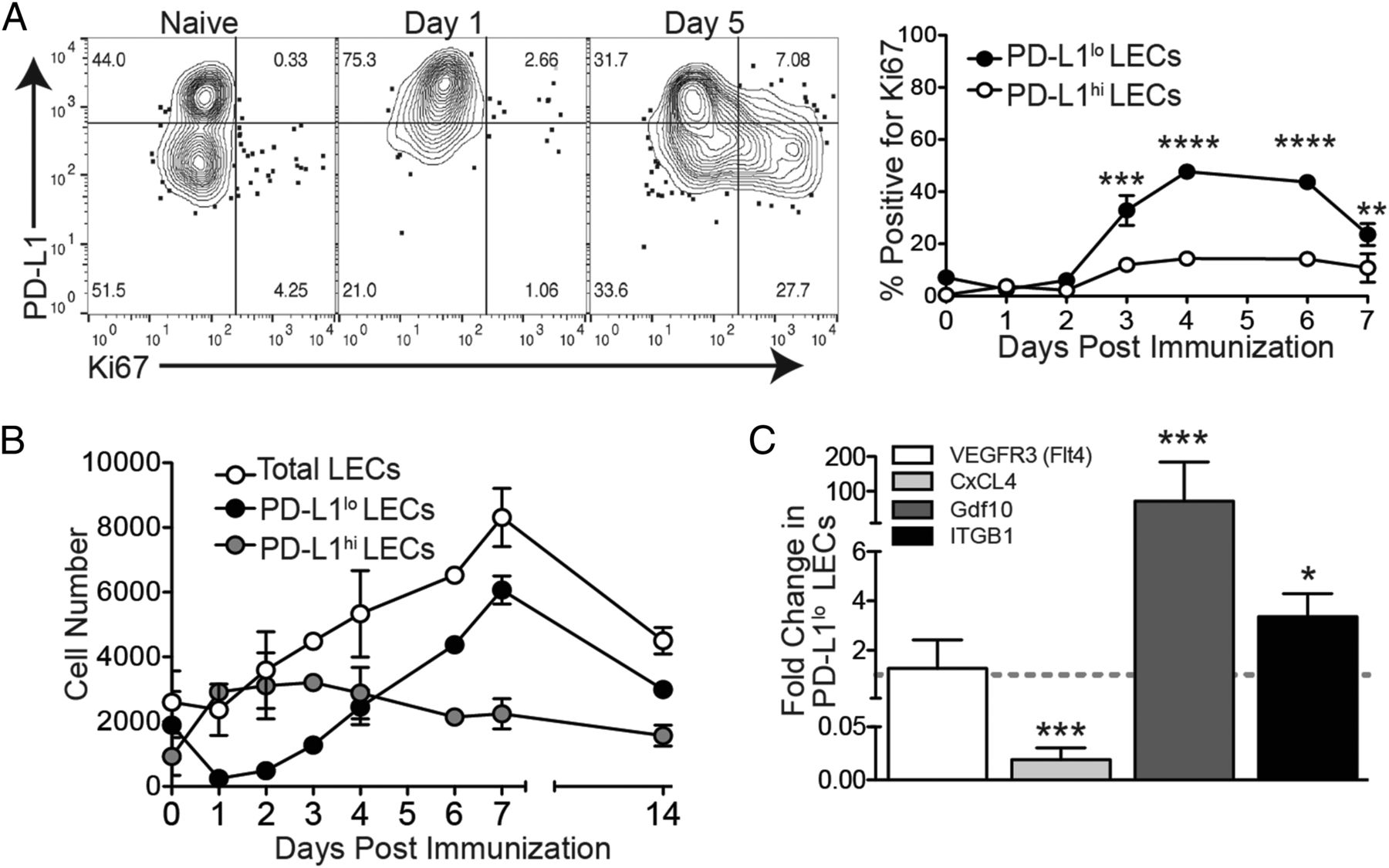 Type 1 IFN and PD-L1 Coordinate Lymphatic Endothelial Cell