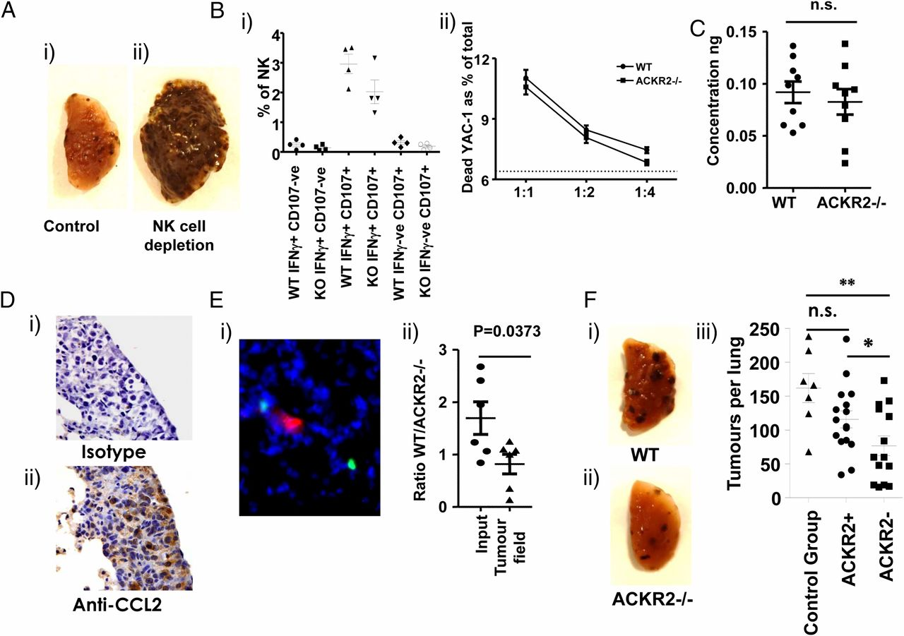 The Atypical Chemokine Receptor Ackr2 Constrains NK Cell