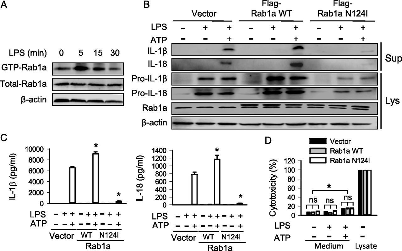 The GTPase Rab1 Is Required for NLRP3 Inflammasome Activation and