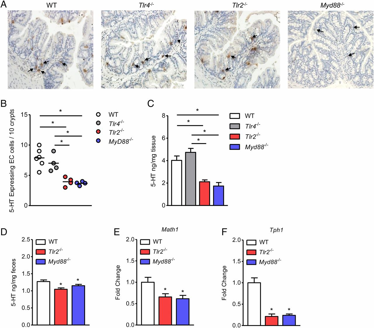 TLR2 Plays a Pivotal Role in Mediating Mucosal Serotonin