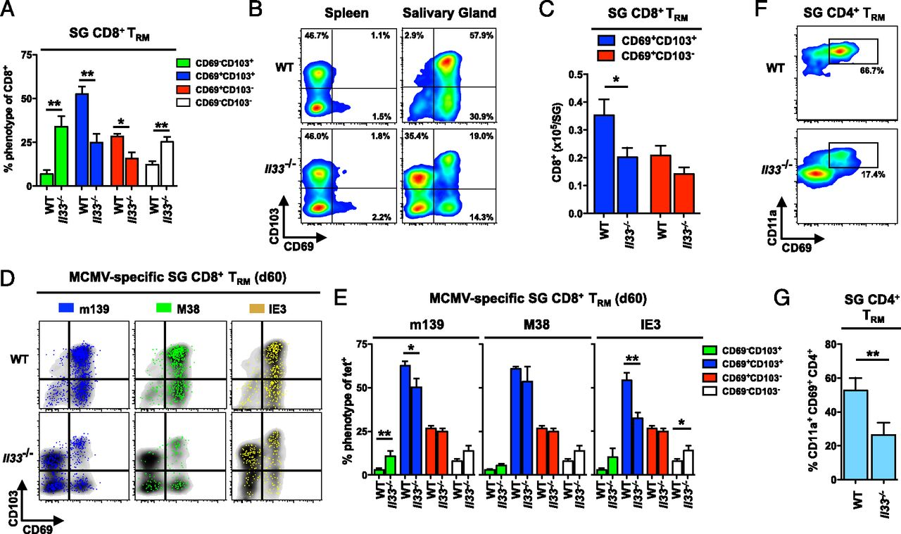 IL-33 Augments Virus-Specific Memory T Cell Inflation and