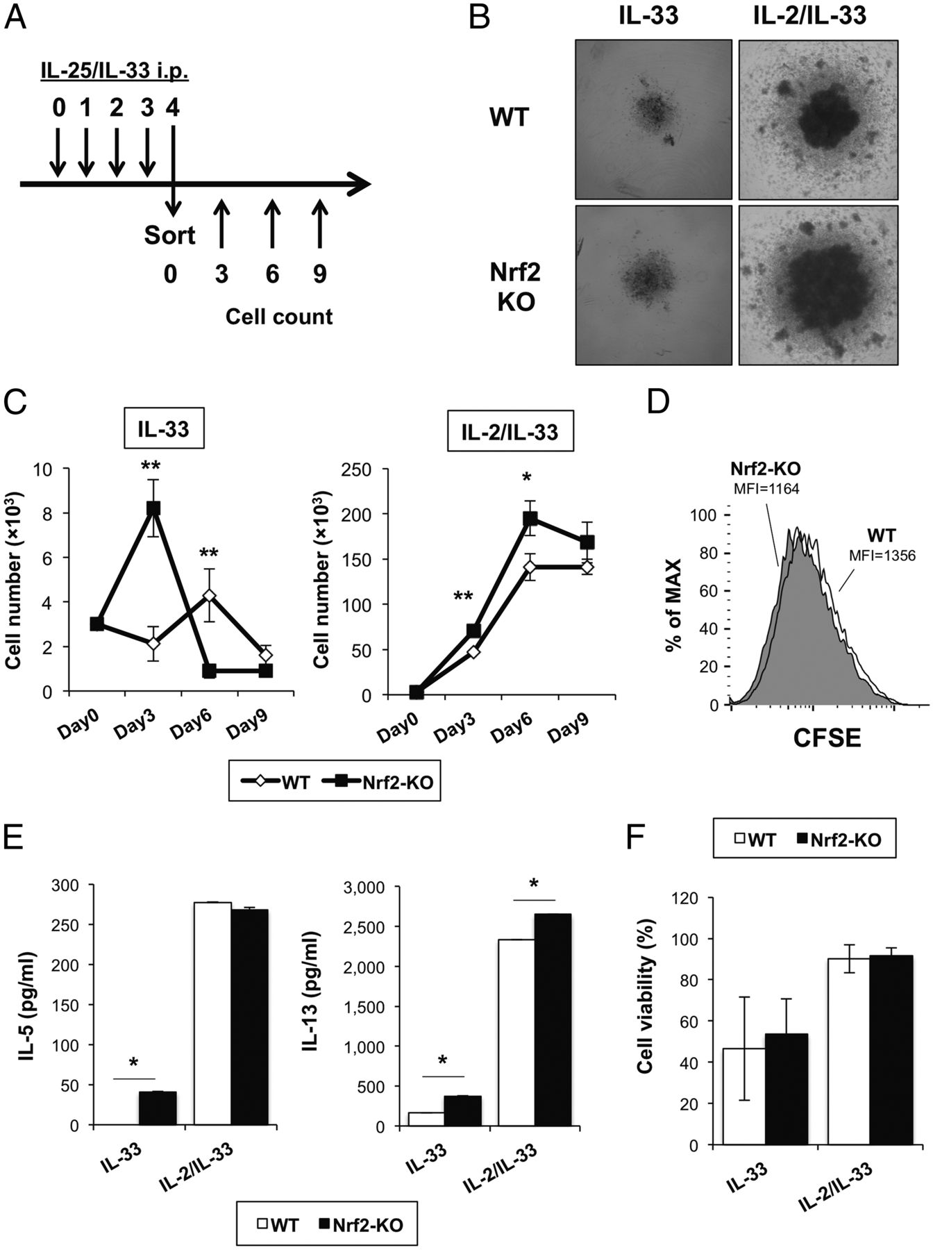 Nrf2 Suppresses Allergic Lung Inflammation by Attenuating